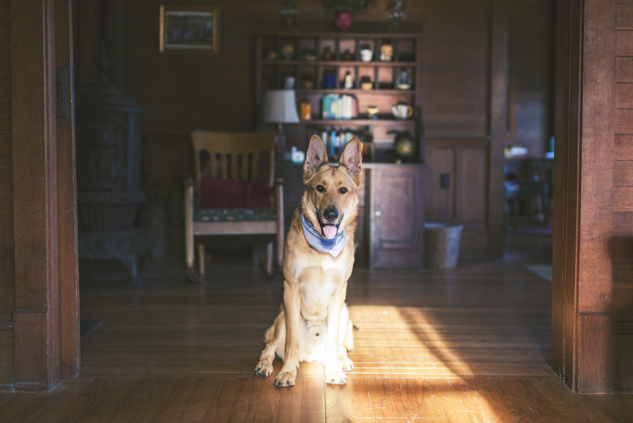 house moving services for families with pets Prince William County